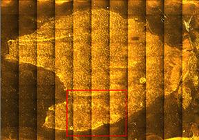 Figure 1. Stitched montage video image of the diseased human tissue slice, with mapped area highlighted in red. Total sample width ~25 mm.