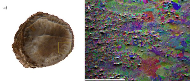 Cross-section through a fossil crinoid stem and IPF on PRIAS™ center map of the fossil crinoid stem sample collected from the indicated area.