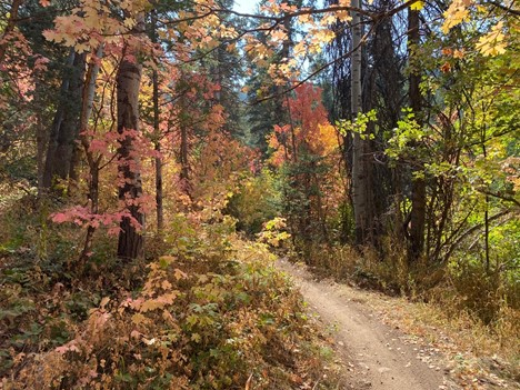 A perfect autumn day on the trail.