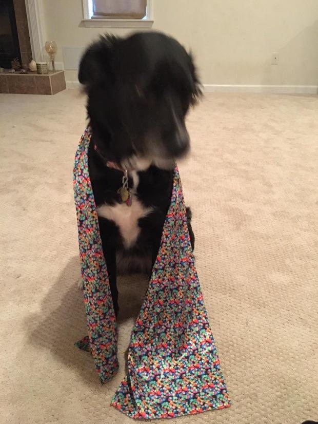 EBSD scarf/dog warmer.
